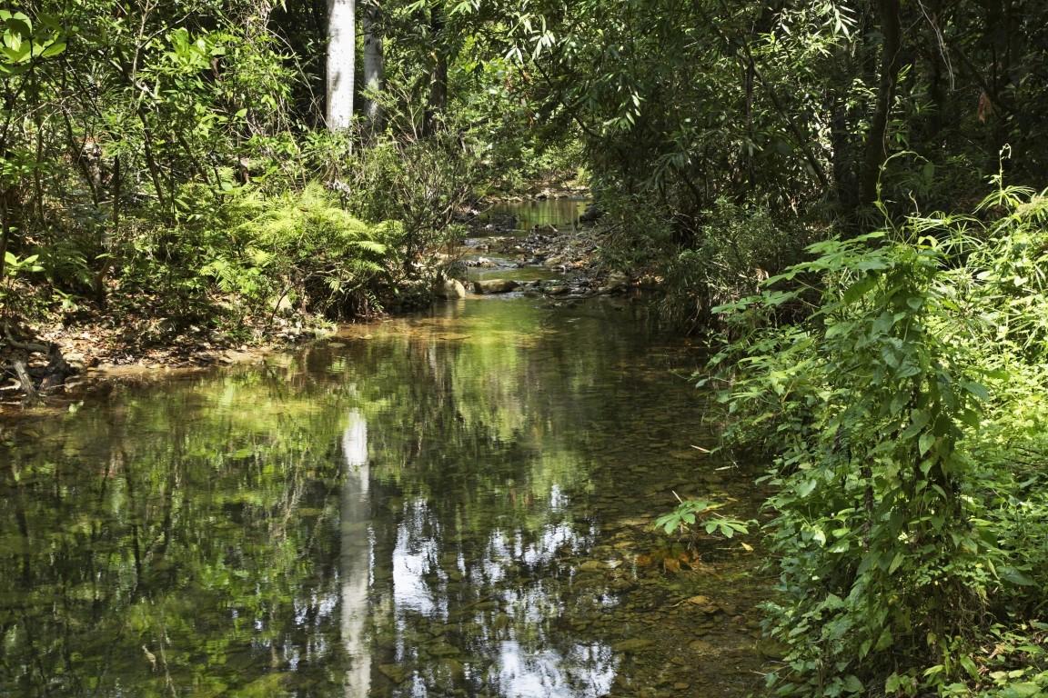Rio Guaurabo near Cubano Park, Trinidad