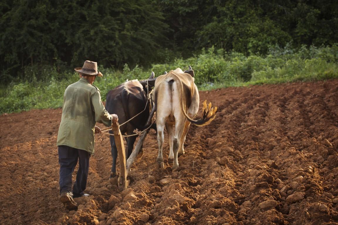 A farmer working the soil in Vinales, Cuba