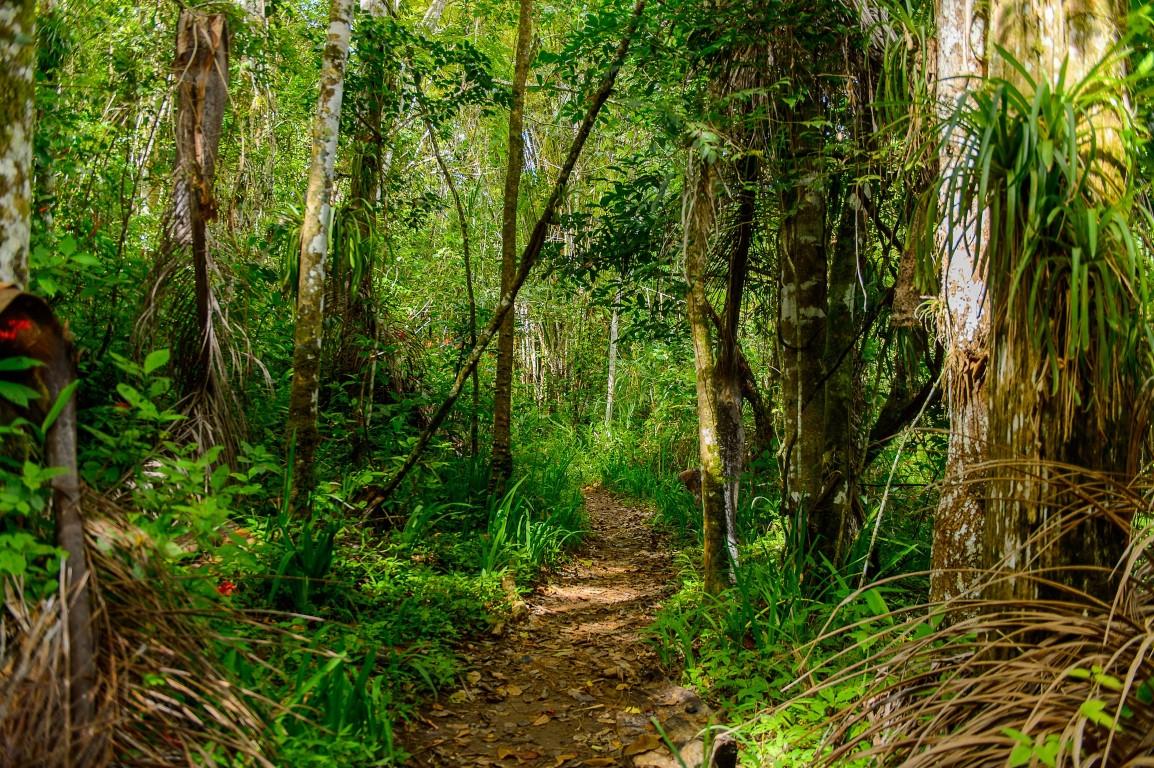 Walking trail in Topes de Collantes near Trinidad, Cuba