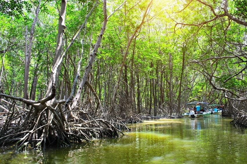 A boat trip in the Celestun mangrove