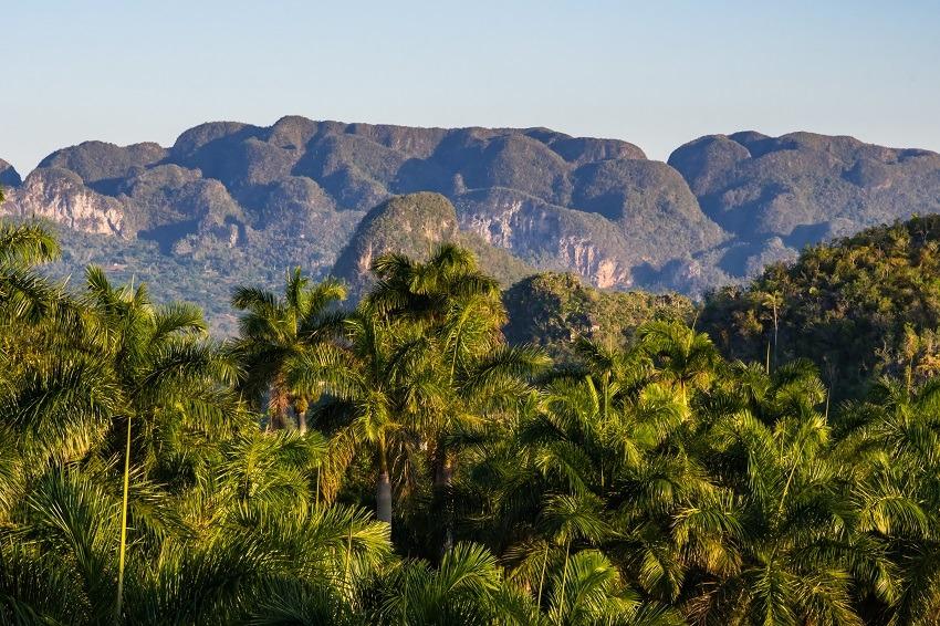 Treetops in Vinales, Cuba