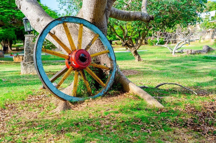 Wagon wheel against tree in Josone Park