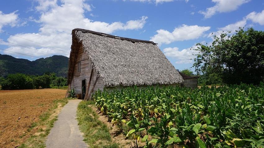 Tobacco drying barn in Vinales, Cuba