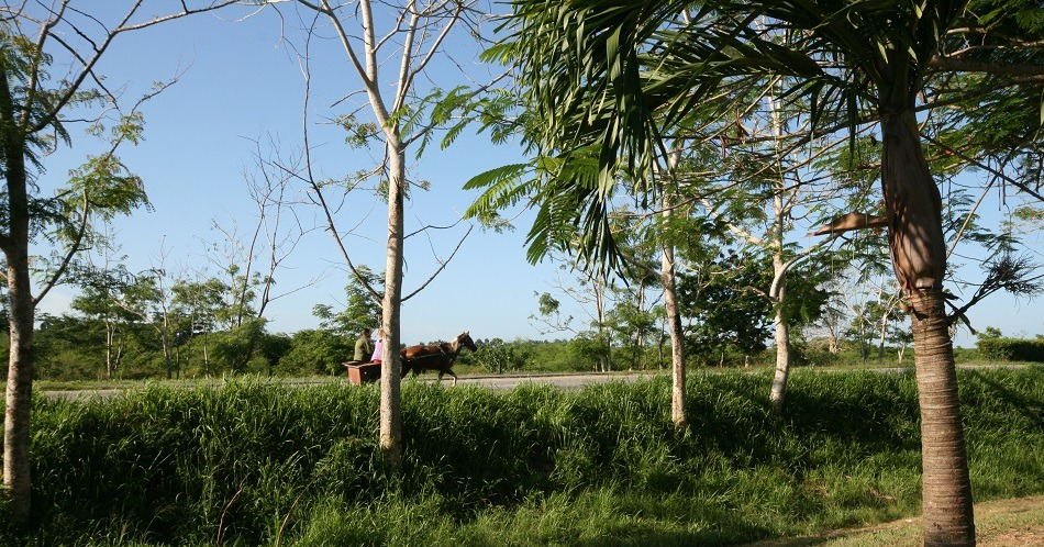Horse and cart on Cuban road