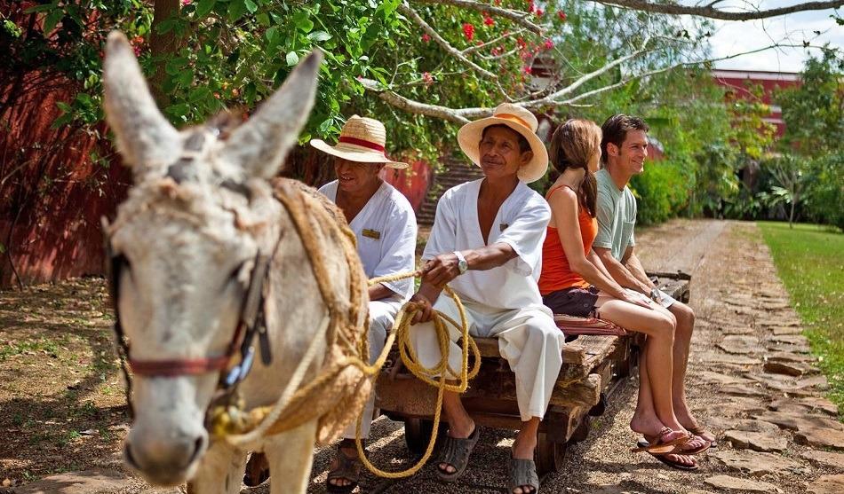 Donkey pulling a cart at a Mexican hacienda