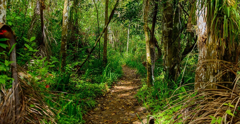 Walking trail in Topes de Collantes park, Cuba